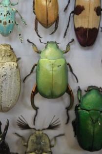 Escarabajos_1