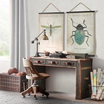 Escarabajos_11