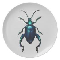 Escarabajos_7