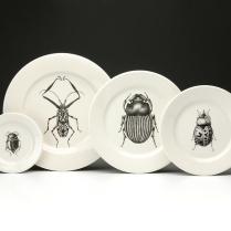 Escarabajos_8