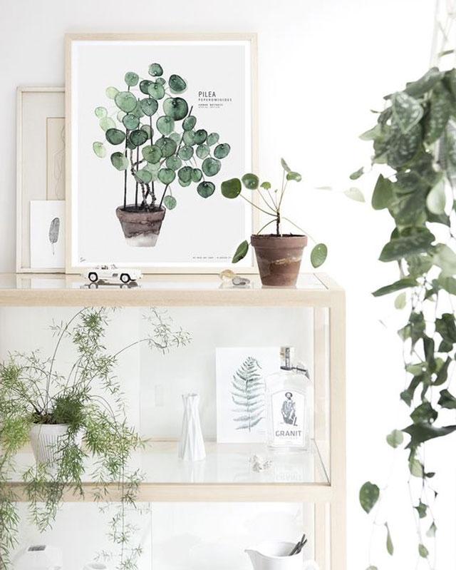 Botanical_2