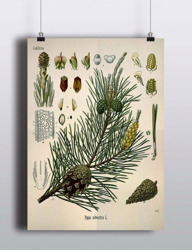 Botanical_24