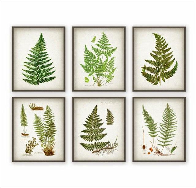 Botanical_25