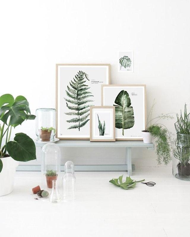 Botanical_4