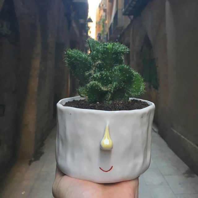 pompilio_plants_1